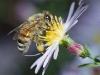 bee_flower_mixed_2