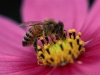 bee_flower_mixed_3