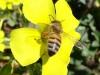bee_flower_mixed_4