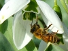 bee_flower_mixed_5