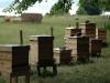 beginners_apiary