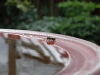 Bee drinking from birdbath by Jeremy Carruthers